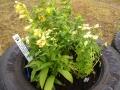 Dela trädgård, To share garden