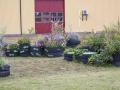 Dela Trädgård