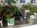 plantor3_webb