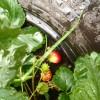 Dela trŠdgŒrd, To share garden